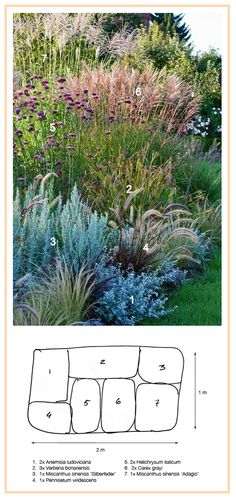Ornamental Grasses Border …………………… White Sagebrush 'Silver Queen' (Artemisia ludoviciana) Gray's Sedge (Carex grayi) Curry Plant (Helichrysum italicum) Black-Flowered Fountaingrass (Pennisetum [. Back Gardens, Outdoor Gardens, Miscanthus Sinensis Silberfeder, Ornamental Grass Landscape, Landscape Grasses, Tall Ornamental Grasses, Landscape Design, Garden Design, Landscape Photos