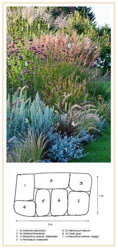 #Ornamental #Grasses #Border: 1. #White #Sagebrush 'Silver Queen' #Artemisia #ludoviciana) 2. #Gray's #Sedge (Carex grayi) 3. #Curry #Plant (Helichrysum italicum) 4. Black-Flowered Fountaingrass (Pennisetum viridescens) 5. Tall Verbena (Verbena bonariensis) 6. Eulalia, Maiden Grass 'Adagio' (Miscanthus sinensis) 7. Eulalia, Maiden Grass 'Silberfeder' (Miscanthus sinensis)