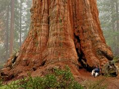 The Biggest Tree in the World