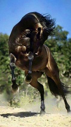 Horses & Freedom added a new photo — with Monik Familliar Verdier and 11 others. Cute Horses, Pretty Horses, Horse Love, Nature Animals, Animals And Pets, Funny Animals, Cute Animals, Beautiful Creatures, Animals Beautiful