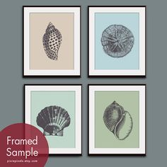 Underwater Sea Shell Collection (Series B) Set of 4 - 11x14 Art Prints (Featured in Charcoal with Assorted Backgrounds)