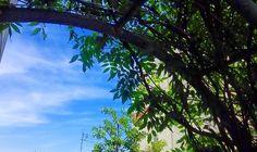 どうもこんにちは 今日の福岡も晴れ 梅雨入りの前に夏が近づいて きよるばい #空 #イマソラ #夏 #いやまだ春 #sky #clouds #cloud #summer  #福岡 #fukuoka #japan #skylover by 963.kurosan