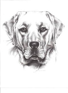 I like doing commissioned pet portraits due to the subject matter and the joy it brings to the pet owner.  #Art #PetPortraits #CommissionArt #AnimalArt #PencilArt #Pets #BlackAndWhiteArt