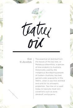 Wellness Encyclopedia: All About Tea Tree Oil + Hydrating Hair Oil DIY – Free People Blog | Free People Blog #freepeople