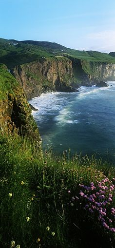 Wildflowers at the Coast, County Antrim, Northern Ireland