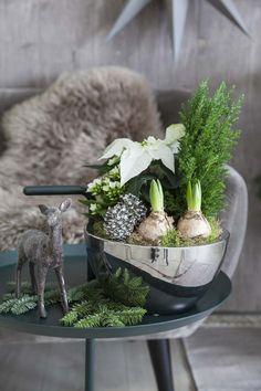 Svibler - duften av jul | Inspirasjon fra Mester Grønn