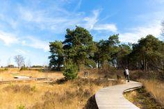 Wandelpad strabrechtse Heide Art Impressions, Hiking Trails, Adventure Time, Netherlands, Places Ive Been, Dutch, Wanderlust, Walking, Holland