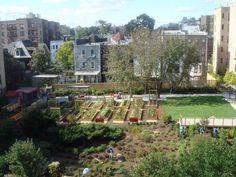 NYRP Unveils Target Bronx Community Garden in South Bronx > NYRP > Blog