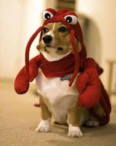 I swear this board didn't start to chronicle costumes for dogs, but they are just so cute...besides you could wear this crab costume (or at the least dress your child in it ;)