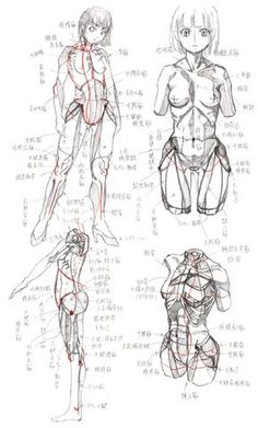 Female Muscles
