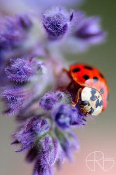 ladybug II by felesfatalis.deviantart.com on @DeviantArt