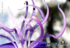 Detalhes da flor de quaresmeira.