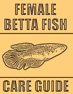Female Betta Fish Complete Care Guide by Chris Weber… Seahorse Aquarium, Aquarium Fish, Betta Fish Care, Fishing World, Home Aquarium, Beta Fish, Fish House, Siamese Fighting Fish, Two Fish