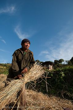 Rice harvesting in east Bhutan | Mongar, Bhutan | Alex Treadway | Flickr