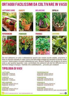 Ortaggi facilissimi da coltivare in vaso