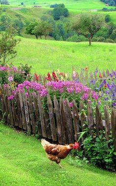 Picket fences and rolling hills - and everyone should own at least one chicken.