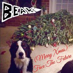 Dog Shaming Christmas Tree Fainted - Friday Frivolity - Holiday Cheer, One Way or Another - Christmas Memes + LINKY for all things Fun, Funny, Happy & Hopeful! Love My Dog, Puppy Love, Funny Animal Pictures, Funny Animals, Cute Animals, Dog Pictures, Animal Pics, Funny Animal Humor, Quote Pictures
