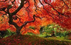 belle foto di paesaggi autunnali The Autumn's beauty in 27 pictures #Autumn #fall #autunno #arancione #orance #brown #marrone #beautiful #bellezza #magico #magic