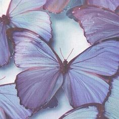 54 ideas nature aesthetic pastel for 2019 Lavender Aesthetic, Rainbow Aesthetic, Nature Aesthetic, Witch Aesthetic, Aesthetic Colors, Aesthetic Pictures, Aesthetic Pastel, Aesthetic Boy, Violet Pastel