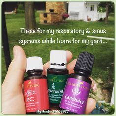 I love these three essential oils!! All of these come in the Young Living Premium Starter Kit.. #youngliving #essentialoils #natural #health #wellness #oilinfusedliving #triharmonyoilers #DaretoLivetheLifeYouLove #lavender #springflowers #mowing #trees #lavender #lemon #rc #peppermint