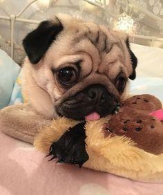 Pug and buddy