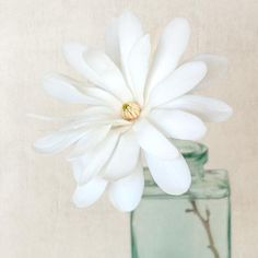 White Magnolia Flower Photography Print