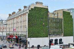 London-Largest-LivingWall1-537x357.jpg (537×357)