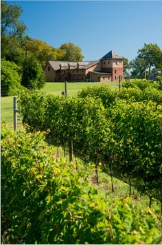 A view of the vines & the winery #ChateauBuDeWinery #BohemiaManorFarm #MarylandWine #VAWR
