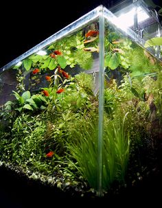 90センチスリム水槽セットから二週間 | 京都精華大学水槽学部 Aquarium, Plants, Goldfish Bowl, Aquarium Fish Tank, Plant, Aquarius, Planets, Fish Tank