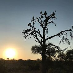 Nothing beats a Simbavati sunset. by guest Anne Lamoureux . African Safari, Lodges, Wilderness, Beats, Wildlife, Celestial, Sunset, World, Outdoor