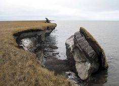 Collapsed permafrost block of coastal tundra on Alaska's Arctic Coast. (Source: USGS) The coldest reaches of the Arctic on land were once thought to be at least temporarily shielded from a major — an… Umea, Environmental Change, Environmental Science, History Channel, Tundra Ártica, Virus Del Zika, Wildlife Biologist, Dengue, Sea Level Rise