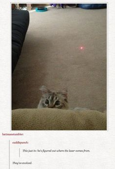 Cats May Have Discovered The Origin Of The Red Dot