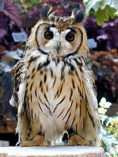 lovely owl - looks like a king with robe and crown.
