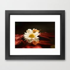 Baby Snail on a flower in the water  Framed Art Print