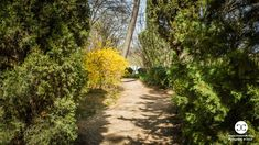Digital Product Thumbnail - Spring in Madrid at Quinta de Molinos Almonds Park Spring Photography, Top Travel Destinations, Travel Images, Almonds, Madrid, Country Roads, Park, Digital, Almond Joy