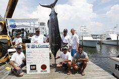 2013 Pirates Cove Billfish Tournament, Matt Lusk Photography