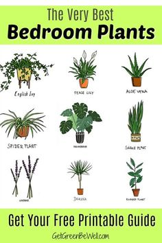 Free Printable with the Best Bedroom Plants for Better Sleep tonight! These are the inexpensive and pretty plants you want to add to your bedroom to clean the air, give off oxygen and absorb toxins. house plants Best Bedroom Plants for Better Sleep Inside Plants, Cool Plants, Green Plants, Best Plants For Bedroom, Plantas Indoor, House Plants Decor, Easy House Plants, Plants For Home, Indoor House Plants