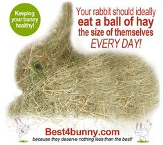 Rabbit care - 10 common mistakes made when caring for rabbits - Best 4 Bunny Pet Bunny Rabbits, Meat Rabbits, Raising Rabbits, Baby Bunnies, Cute Bunny, Dutch Rabbits, Dwarf Bunnies, All About Rabbits, Somebunny Loves You