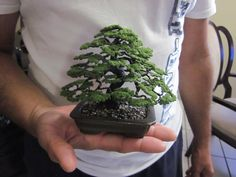 this isn't real. It's a wire bonsai, but it looks great.