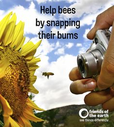 Join the Great British Bee Count, 1-31 May 2015!  Download Friends of the Earth's free app today. Every bee you spot will help the experts build a picture of the health of British bee populations.
