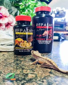 A vitamin and mineral fortified sweet and fruity treat, topper, or food additive for Omnivores and Frugivores. Can be fed as a Gel, Paste, or Smoothie. -Repashy Reptile Accessories, Banana Cream, Vitamins And Minerals, Superfoods, Reptiles, Smoothie, Fish, Canning, Fruit