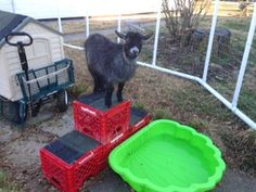 Use milk crates to make a climbing structurefor your goat's playground! Assemble upside-down milk crates into the shape of the mountain and use zip ties to connect the crates. Cut shingles to fit on