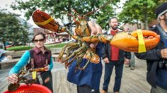 Portland- A close-up look at one of the lobsters Bert and his travelers caught in Casco Bay.