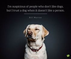 I'm suspicious of people who don't like dogs, but I trust a dog when it doesn't like a person. Bill Murray.