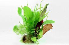 Base de données des plantes | Dennerle