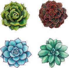 ideas for cactus succulent tattoo etsy Succulents Drawing, Watercolor Succulents, Succulents Art, Succulents Painting, Propagate Succulents, Succulent Cuttings, Colorful Succulents, Growing Succulents, Illustration Cactus