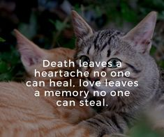 Cat lovers consider cat as part of their lives. A collection of quotes about cat's death to lighten up your heart and refresh happy memories of your dear cat. Loss Grief Quotes, Pet Loss Quotes, Grieving Quotes, Death Quotes, Pet Quotes Cat, Animal Lover Quotes, Pet Poems, Losing A Cat Quote, Losing A Pet