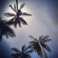 Parque Tayrona Photo by serg289 • Instagram