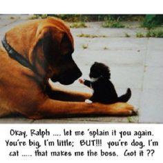 Ok, Ralph... te lo spiegherò un'altra volta. Tu sei grande,io son piccolo. MA!! Te sei un cane, io sono un gatto... che fa di me il capo. Capito??