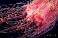 Aquatilis, una invitación abierta a las profundidades del color.